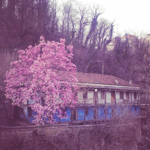 W Gruzji była już wiosna. Pewnie jest dalej