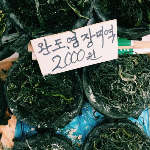 Glony, algi i wodorosty